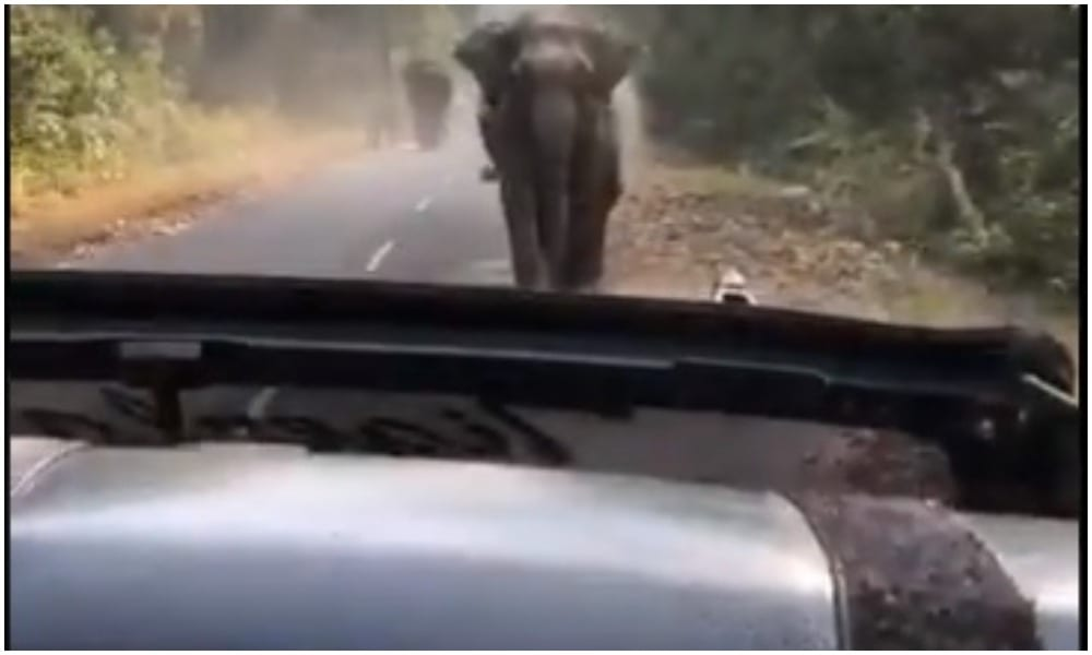 kuch nahi hoga say tourists right before elephant charges at their car
